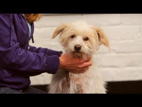 Dog Training: How to Teach Your Dog to Fetch and Retrieve