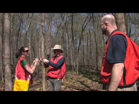 SHOUT Tree Banding Project with the Smithsonian, Introduction