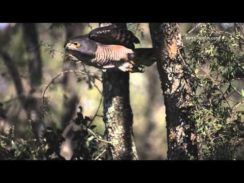 Hawk Kills Mouse: Wild Warp Episode 1