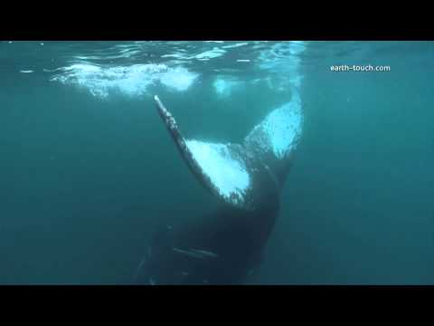 Diver nearly hit by Whale | Crazy Cameramen Episode 2