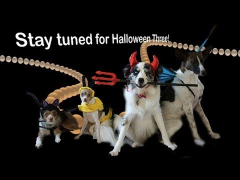 Halloween Cometh! - clicker dog training