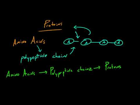 Biology Lecture - 11 - Proteins