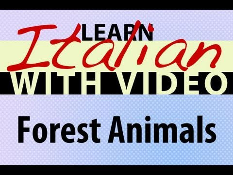 Learn Italian with Video - Forest Animals