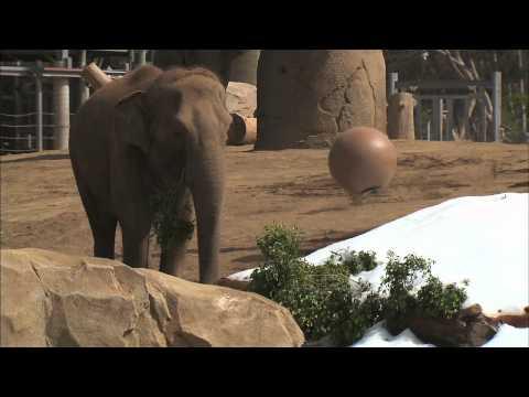 Elephant Snow Day
