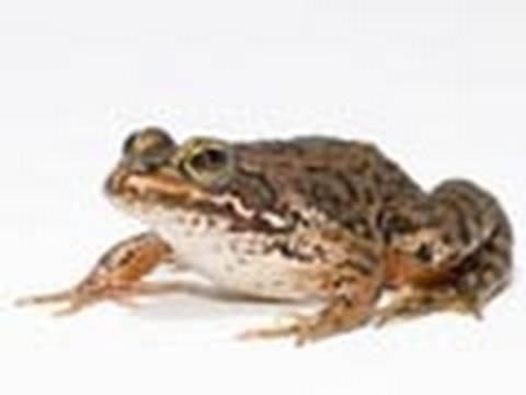 Frogs Gone WILD!