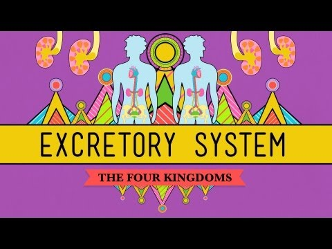 The Excretory System: From Your Heart to the Toilet -  CrashCourse Biology #29