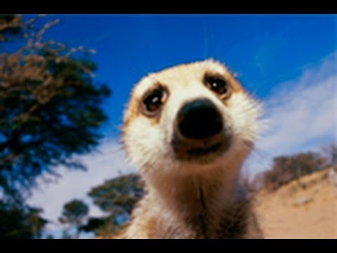 National Geographic Live! - Revenge of the Meerkat