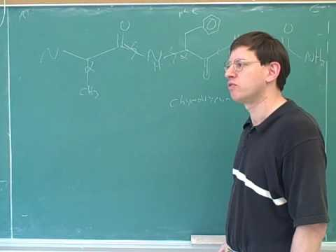 Organic chemistry: Amino acids and peptides (26)