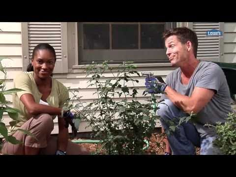 How to Plant Trees, Shrubs and More - Home 101