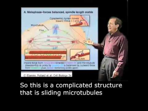 Dick McIntosh Part 2: Understanding Mitosis through Experimentation English Subtitle