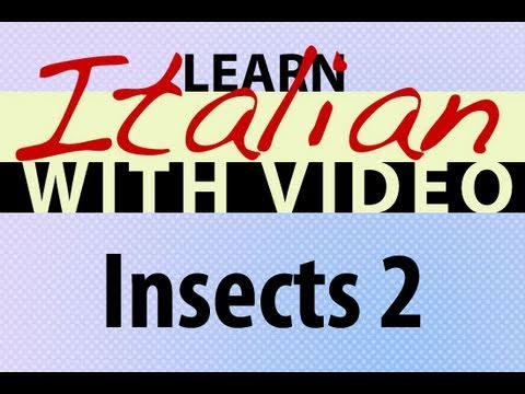 Learn Italian with Video - Insects 2