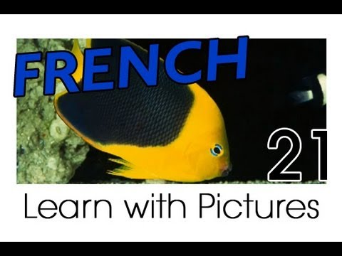 Learn - French Marine Animals Vocabulary