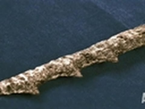 Ancient Spears Found in Fish | Mermaids