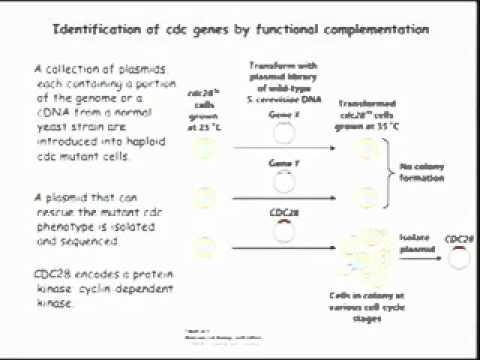 Saylor BIO301: The cell cycle I