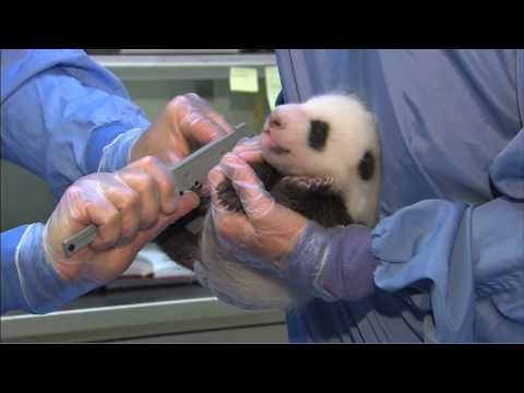Panda Cub 2nd Exam
