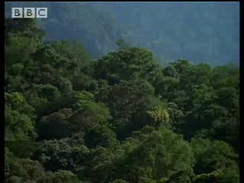 BBC Wild Nature: Unique Sulawesi Animals - Indonesian Fire Islands
