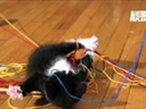 SloMo Playtime Kitties | Too Cute