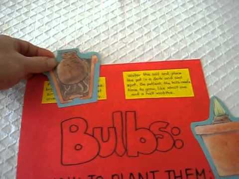 Grade 1 - Science. Bulbs