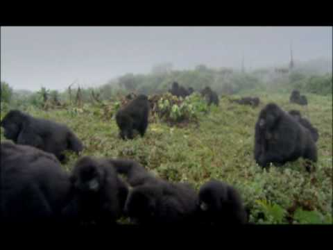 NATURE | The Gorilla King | Preview | PBS
