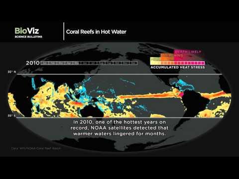 Science Bulletins: Coral Reefs in Hot Water