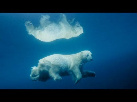 Underwater Polar Bear