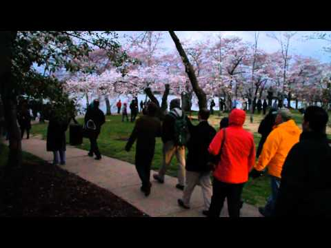 Stand With Japan, Cherry Blossom Walk (Portuguese)