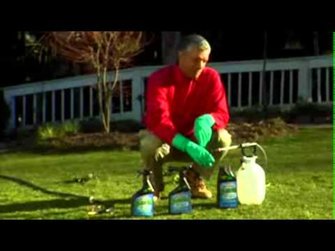 Spectracide Weed Control Products For A Beautiful Lawn - The Home Depot