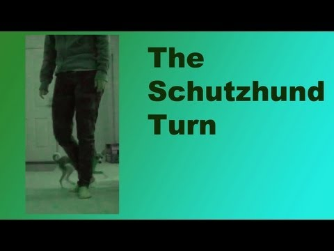 schutzhund turn- clicker dog training tricks