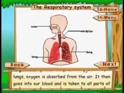 The Respiratory System - Kids Animation Learn Series