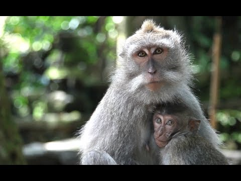 Bronwen Encounters Wild Monkeys - CAKE TRAVELS #6
