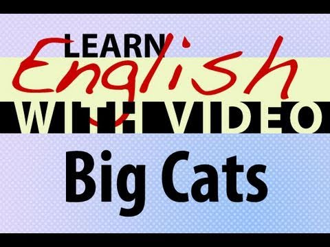 Learn English with Video - Big Cats
