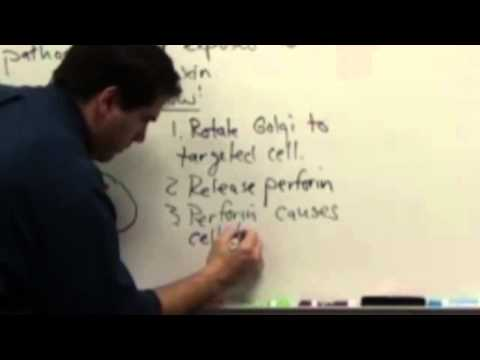 Immune System in Class: Part 2a, Second Line of Defense.mp4