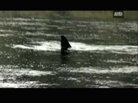 WTF! - Killer Whale Rescue