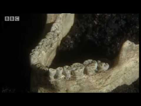 Ancient seafood platter - Wild New World - BBC history
