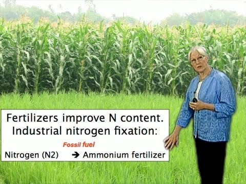Sharon Long (Stanford) Part 1: Cooperation between bacteria and plants for protein nutrition