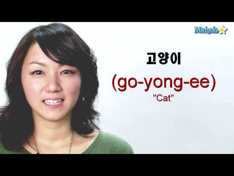 "How to Say ""Cat"" in Korean"