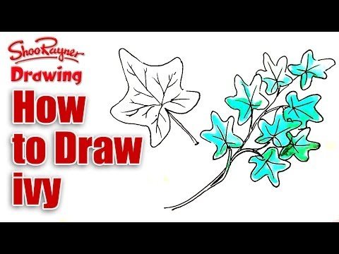 How to draw ivy