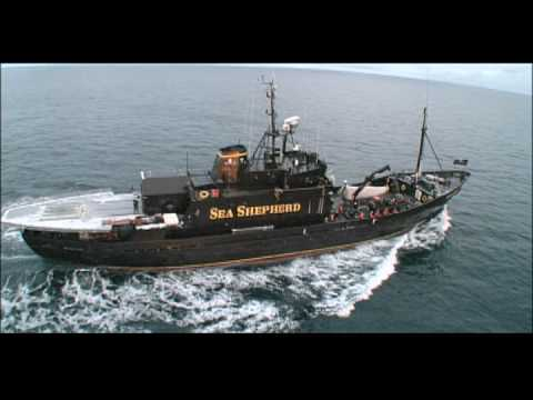 Joining the Sea Shepherds in 24 Hours