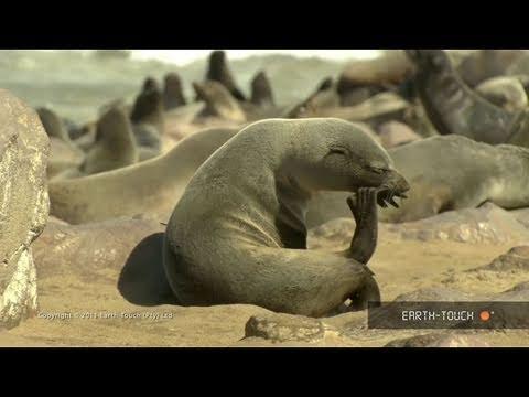 Wonderful wildlife: Hippos, deer & masses of seabirds