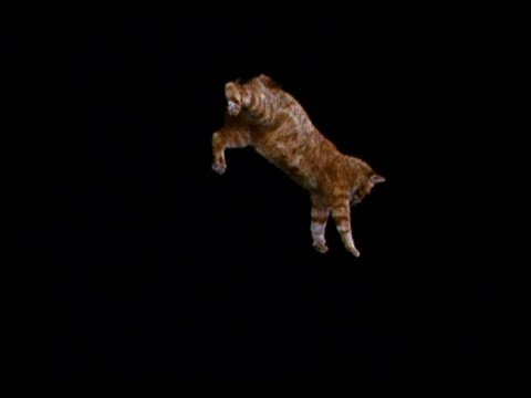 Animal Mysteries: Do Cats Always Land on Their Feet?