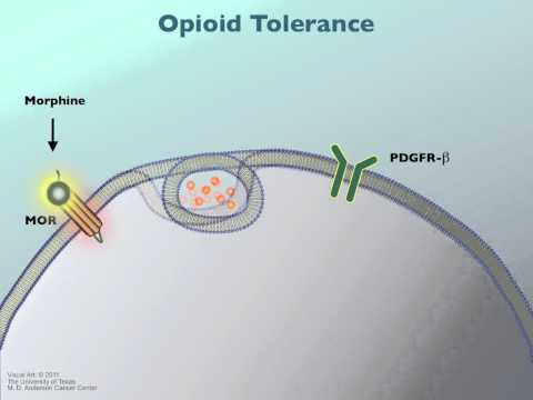 Opioid Tolerance