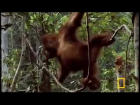 Primates of Indonesia