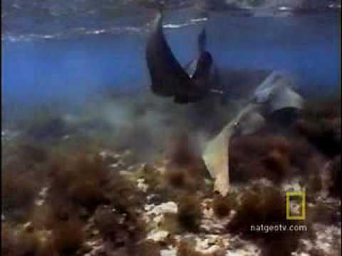 Sharks in Love