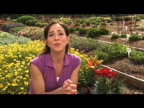 Tips on Perennial Garden Design