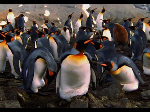 Exploring Oceans: Antarctica