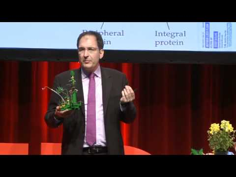 TEDxHamburg - Peter H Seeberger - Carbohydrate Vaccines