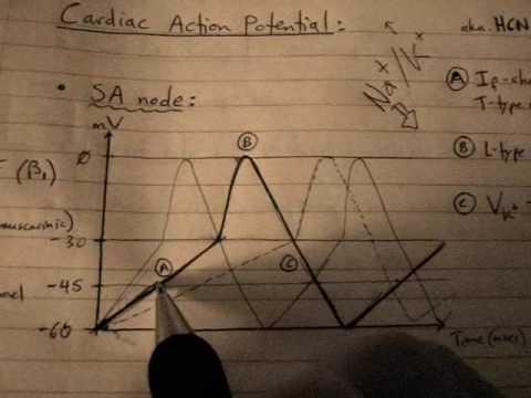 Cardiac Action Potential (Pacemaker AP: part 2/6)