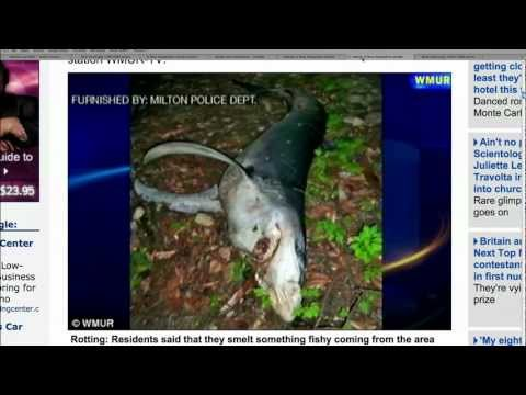 Shark Found in Woods