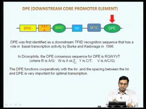 Mod-01 Lec-02 Diversity in core promoter elements