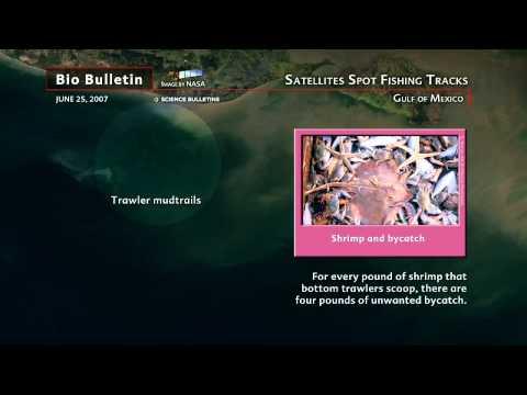 Science Bulletins: Satellites Spot Fishing Tracks